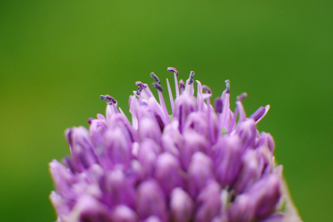 flower, purple, nature, beauty in nature, fragility, plant, selective focus, close-up, growth, no people, petal, one animal, day, animal themes, animals in the wild, insect, outdoors, freshness, flower head