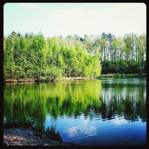 Lietherwald See Lake Trees