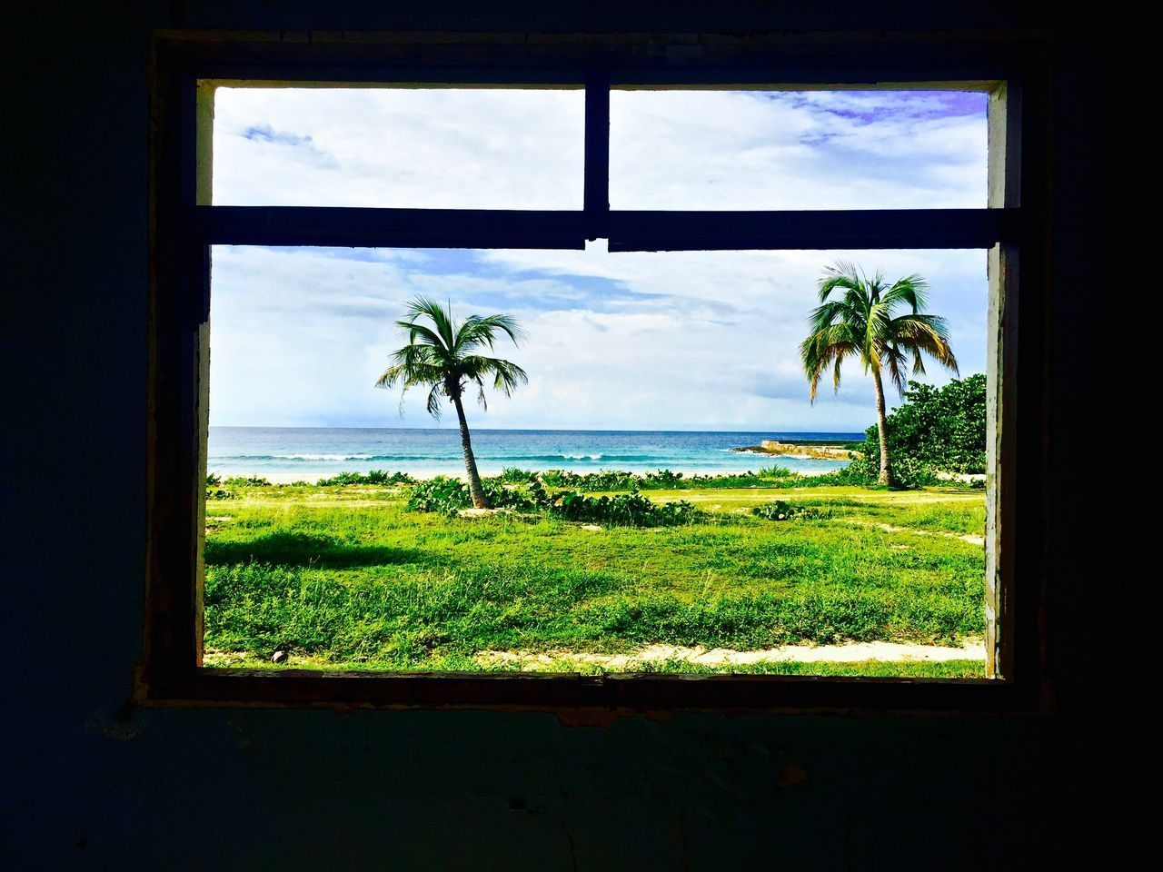 Auto Post Production Filter Beach Cloud Cloud - Sky Day Glass - Material Grass Grassy Green Color Horizon Over Water Indoors  Lawn Nature Ocean Palm Tree Scenics Sea Sky Tranquil Scene Tranquility Transparent Tree Vacations Water Window Adapted To The City
