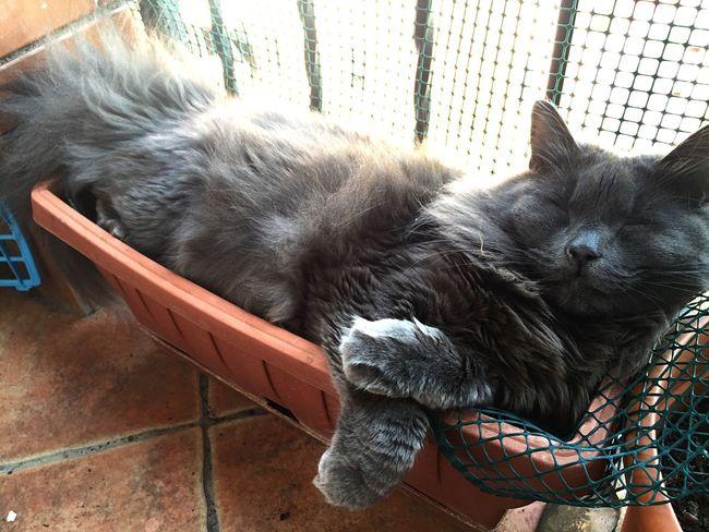 Catnip Cat Cats Cat♡ Erba Gatta Chat Gatto Zufolo