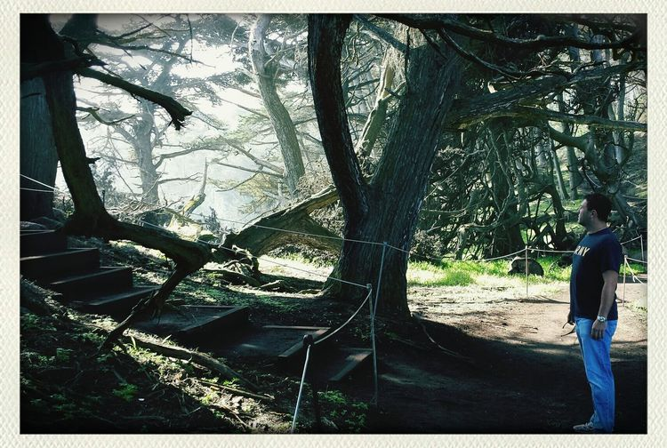 Into the woods. ... Traveling Monterey Bay California Hiking