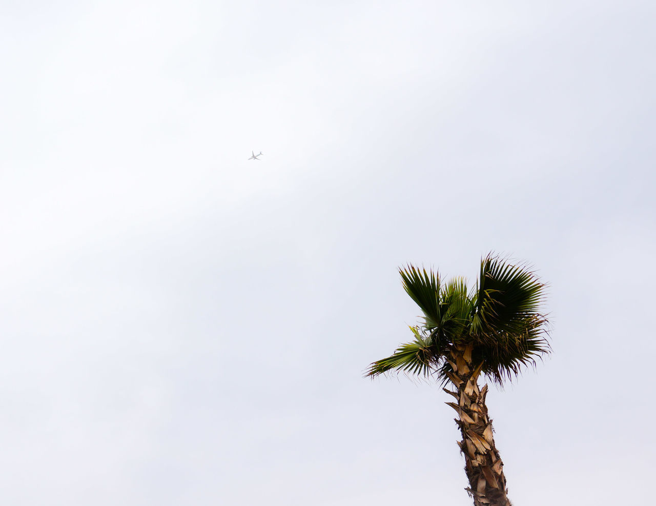 Nope! Goodbyes are not easy ✈ 👋 👋 👋 Palm Palm Tree Open Space Copy Space Tree Flying Plane The Horizon Low Angle View White Sky MnM MnMl Mnmlsm Minimalism Minimal Minimalistic Minimalmood Minimalist Minimalobsession Minimalart Minimalarchy Mobilephotography Shootermag Airplane