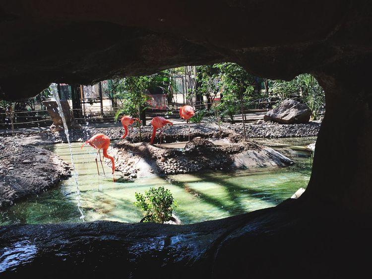 Mexicali Baja California Flamingos