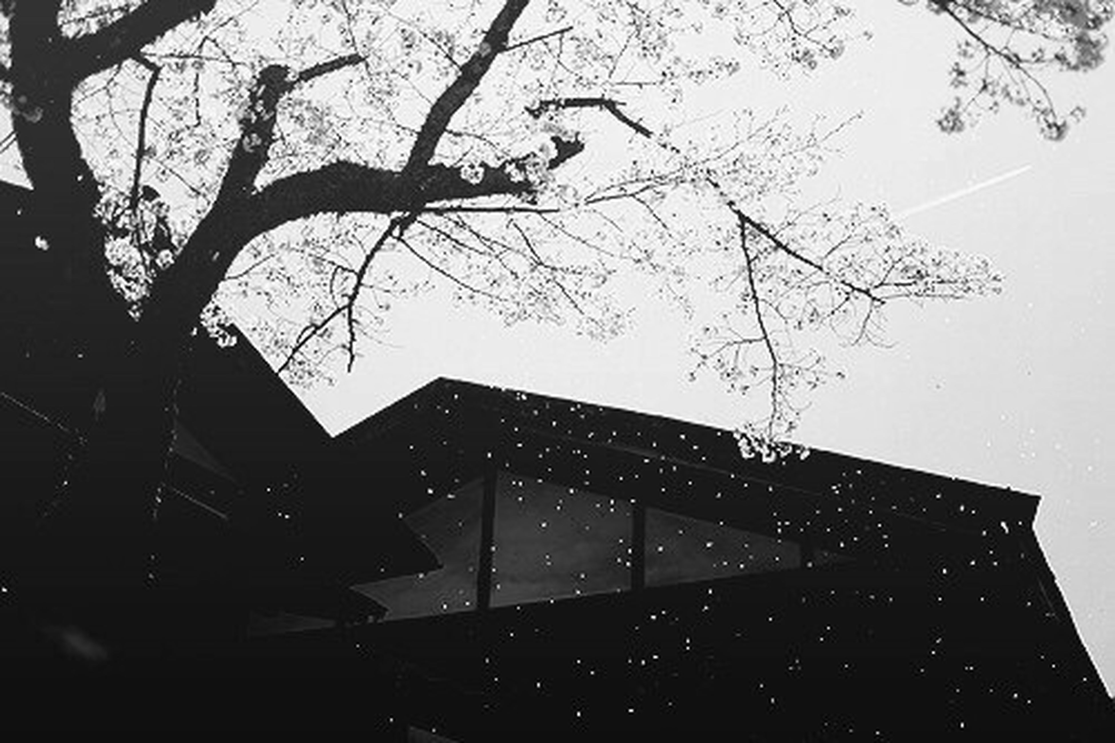 bare tree, branch, tree, low angle view, architecture, building exterior, built structure, sky, silhouette, clear sky, window, dusk, season, no people, outdoors, building, nature, day, weather, city
