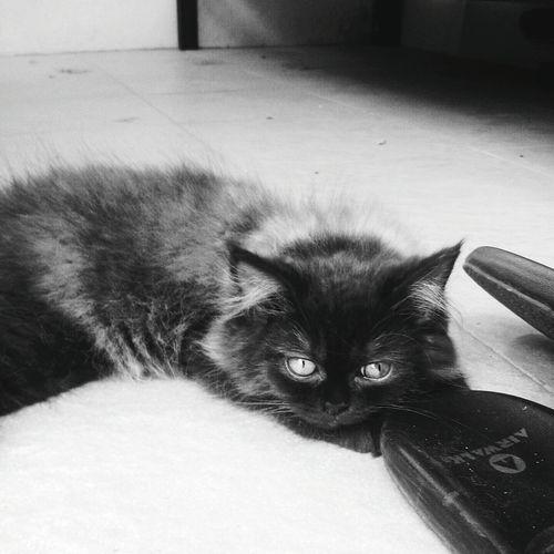 Cat Pet Life  Monochrome Sleepy Daily Shot