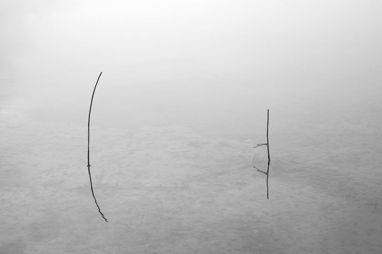 Two bare grass sticks, as well as a crouching dragonfly, reflected in calm pond. In black and white. Artistic Bare Black And White Bottom Calm Childhood Crouching Dragonfly Grass Hunting Lake Nature Peaceful Pond Reflections River Silence Simple Sticks Surface Two People Water