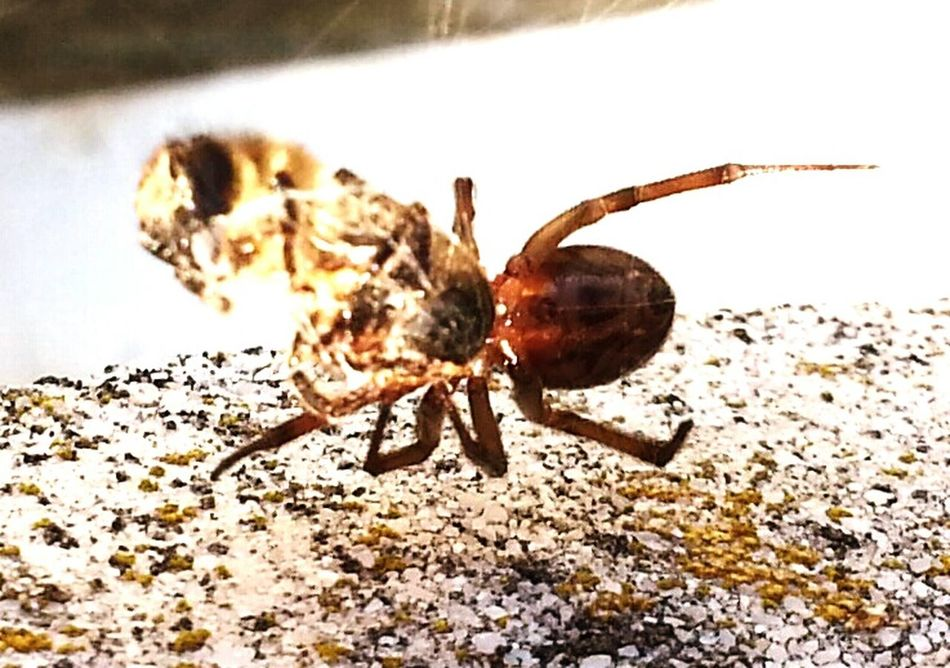 Hello World Check This Out Taking Photos Insect Photography National Geographic Smartphone Photography Spinne Und Biene Hanging Out Estepona Open Edit For Everyone Nature Photography Nationalgeographic Smart Simplicity