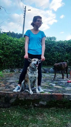 Traveling Dog Love Dog Blue Sky Blue Friends