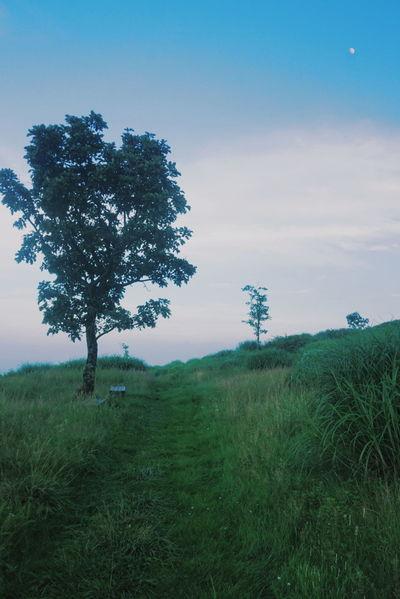 Tree Grass Sky Beauty In Nature No People Outdoors Day Nature Forest 한국 대한민국 경상남도 황매산 Mountain Korea Bench Moon Evening