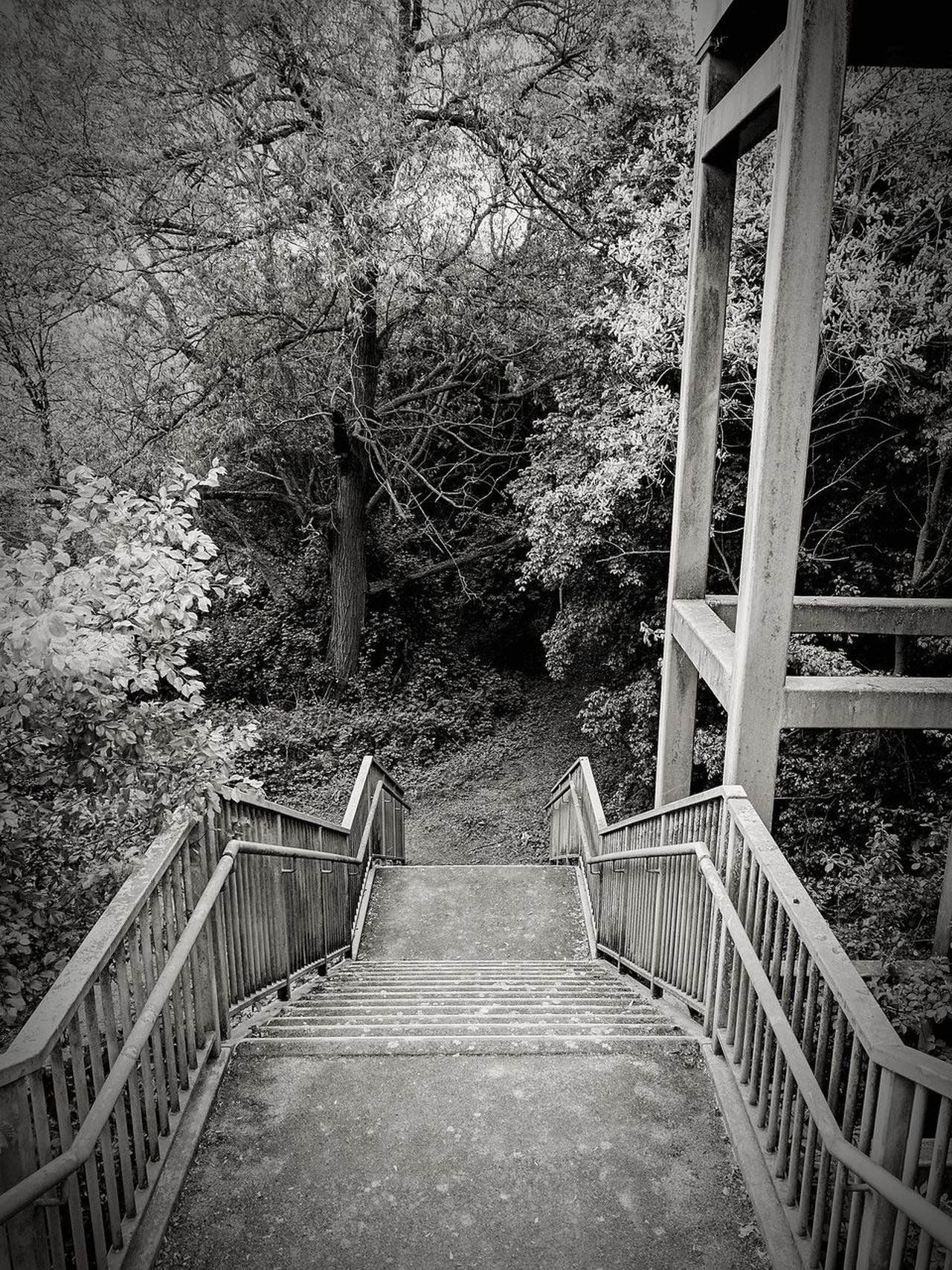 Silent Stairway Railing Tree Day Outdoors No People Growth The Way Forward Built Structure Architecture Footbridge Nature Sky Black And White Simplicity Urban Structure Steps Stairway Footfall