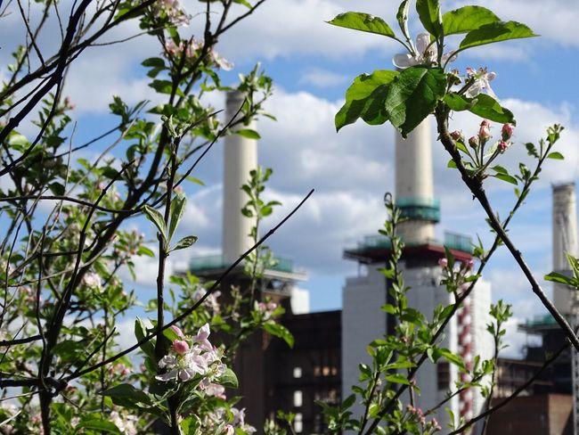 Battersea Power Station Batterseapowerstation Battersea Powerstation LONDON❤ Eyeemphoto