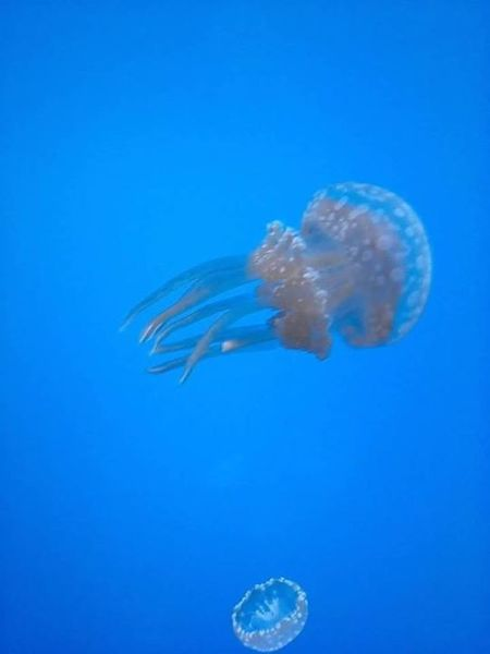 Your Art Is Portable With Caseable Near And Far Gatlinburg Tennessee Jelly Fish