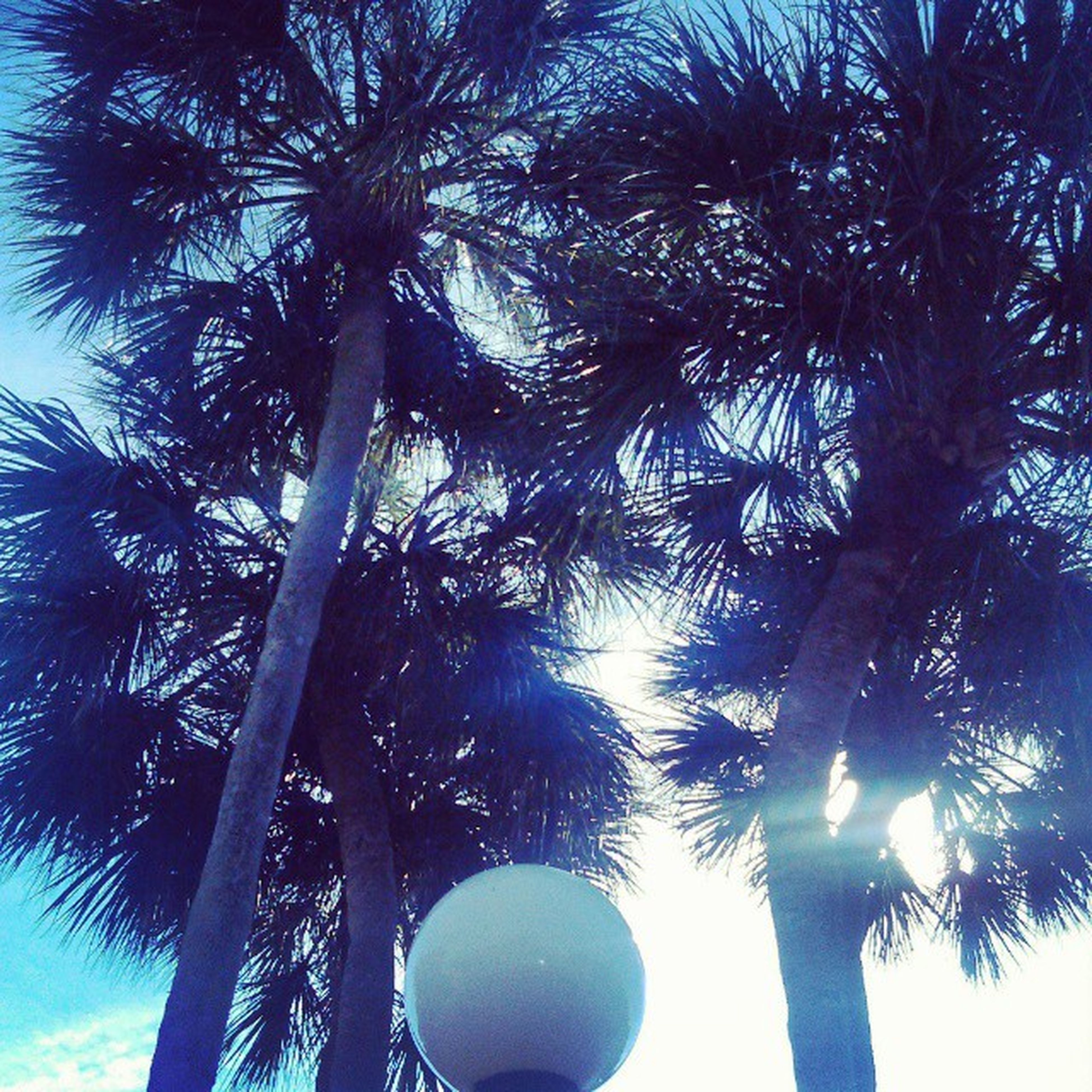 palm tree, low angle view, tree, growth, silhouette, tree trunk, palm leaf, sun, tall - high, sky, clear sky, nature, branch, sunlight, tranquility, beauty in nature, blue, sunbeam, lens flare, outdoors