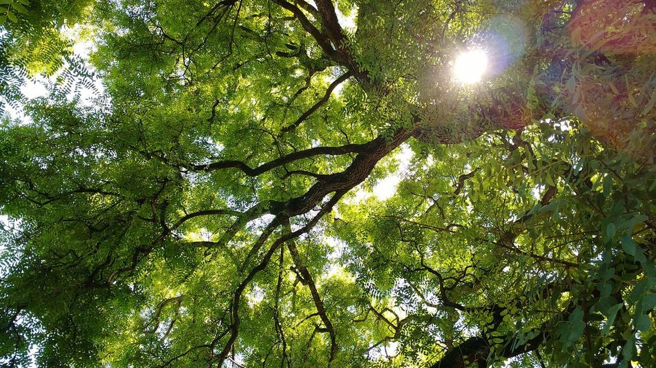 Sin Filtros Point Of View Tree Nature No Edit/no Filter Green Green Green!
