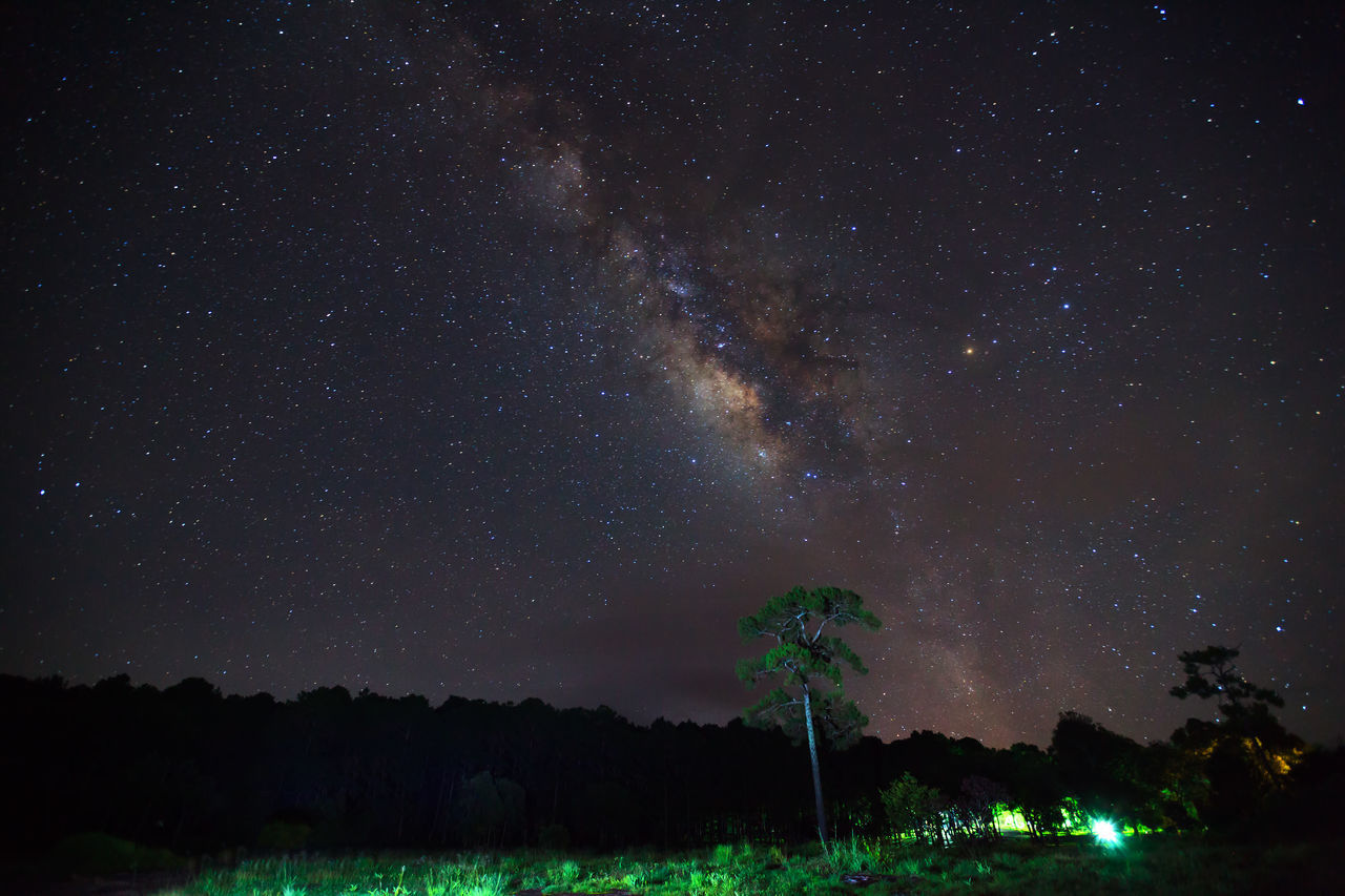 night, scenics, beauty in nature, tranquility, star - space, tranquil scene, nature, tree, outdoors, sky, no people, silhouette, astronomy, starry, galaxy, landscape, milky way