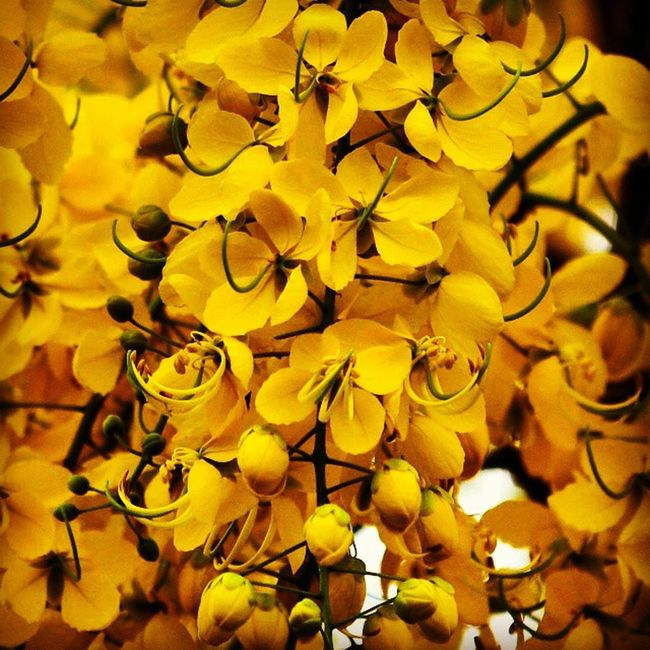 Hindustan_times Colours_of_Chandigarh Weather Flowers Loveit