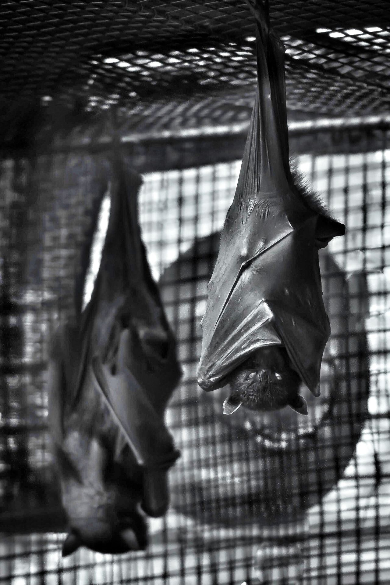 Creepy Creatures Bw_collection EyeEm Best Shots - Black + White Shootermag Mission Mystery
