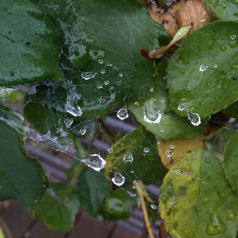 Raindrops Patterns & Textures Refraction Delicate Beauty Captured Moment