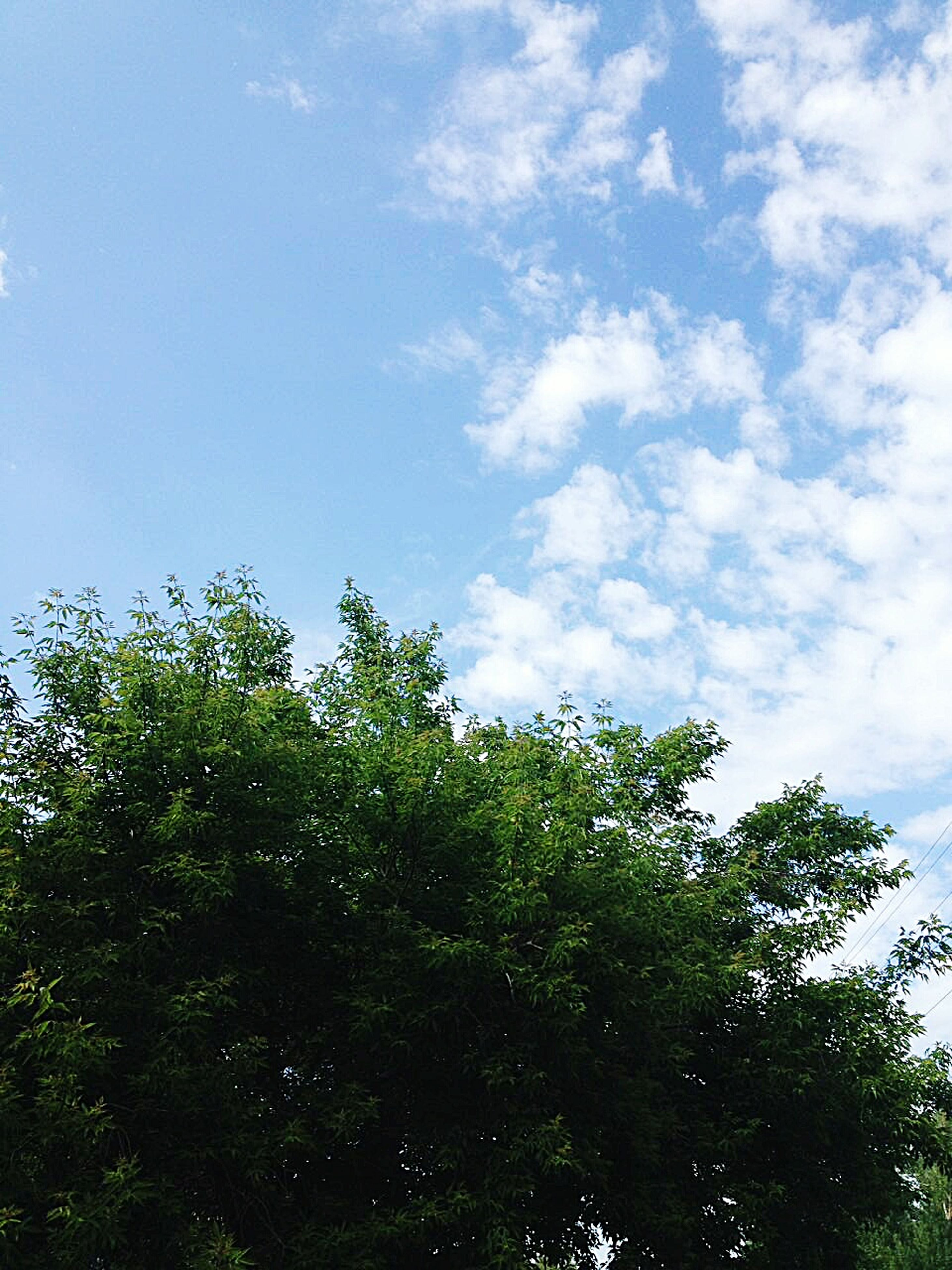 tree, nature, low angle view, day, sky, growth, no people, forest, beauty in nature, outdoors