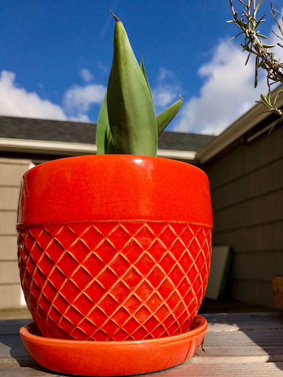 Red No People Sky Freshness Built Structure Close-up Outdoors Day Architecture Orange Pot Potted Plant Aloe Vera Plant