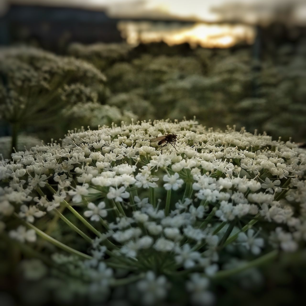 Пятая гора Nature Close-up No People Outdoors Selective Focus Beauty In Nature Day Plant Tranquility Cold Temperature Snow Grass Fragility Freshness