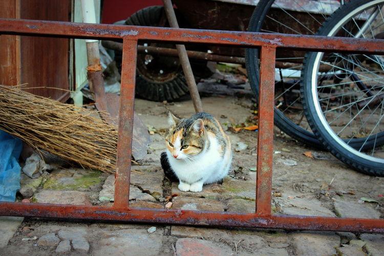 Animal Themes Barrow Bike Bricks Day Domestic Animals Domestic Cat Ladder Mammal No People One Animal Outdoors Pets Sitting Sweeper Waiting Wheelbarrow Dorozsma Shovel White Cat Tabby Misgive Suspect