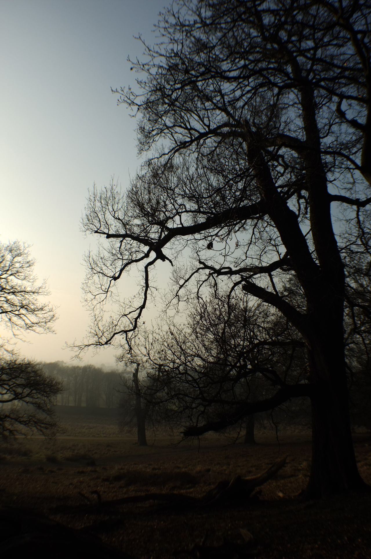 Tree Nature Silhouette Bare Tree Tranquility Branch Tranquil Scene No People Sky Landscape Beauty In Nature Outdoors Day London Winter