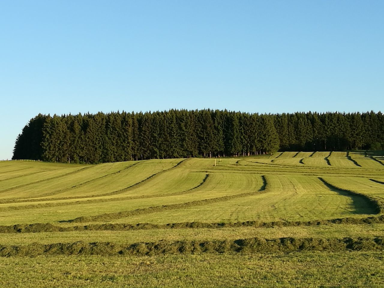 clear sky, field, agriculture, landscape, growth, tree, tranquil scene, nature, no people, tranquility, beauty in nature, day, scenics, outdoors, grass, hay bale, sky