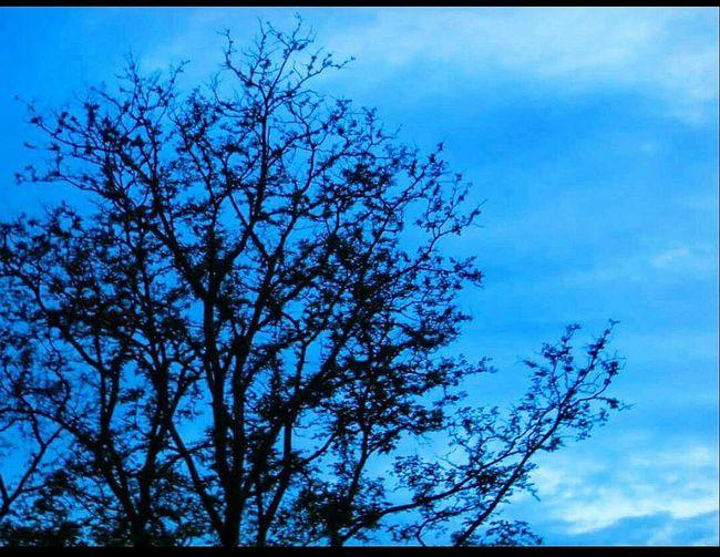 Pure blue. So blue. Color Palette Eyeemphoto Dusky Sky Sky Tree Bluesky Blackandblue Branch Silhouette Beauty In Nature Nature Cloud Treetop Outdoors Outline Scenics Blue