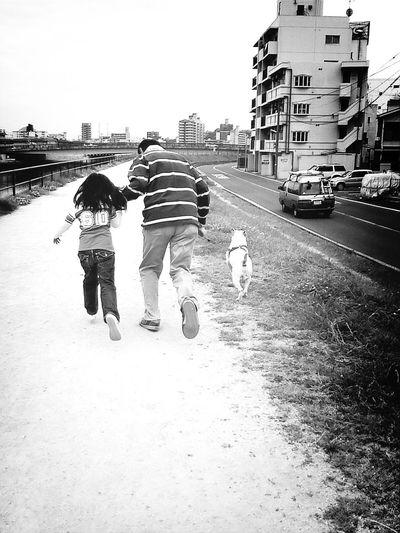 Parent And Child Bullterrier