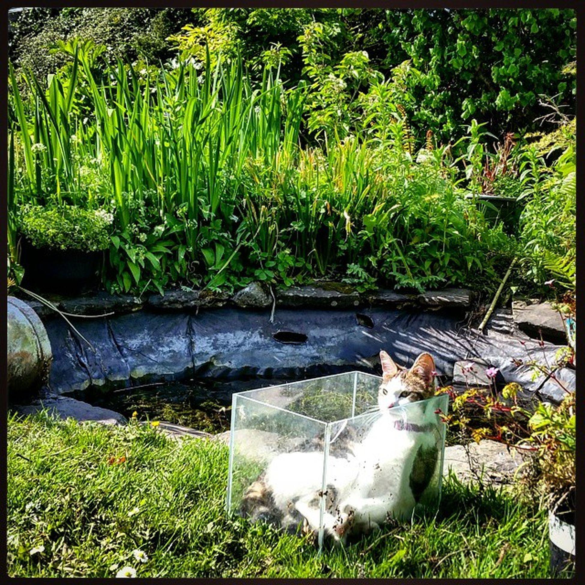 Elsa just relaxing in an old fish tank today enjoying the sun! 😂 Crazykitten Cats Catmojo Petsofinstagram Catsofinstagram Animallove