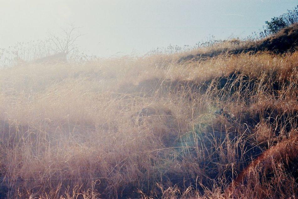 Dried Grass Western Ghats Analogue Photography Canon Eos 66 Sun Golden Overexposure Tikonafort 2007 Mystical Wind Rocks Elements Lightplay Arid Pale Blue Sky Still Quite Hum Calm Rainbow Colors Prism