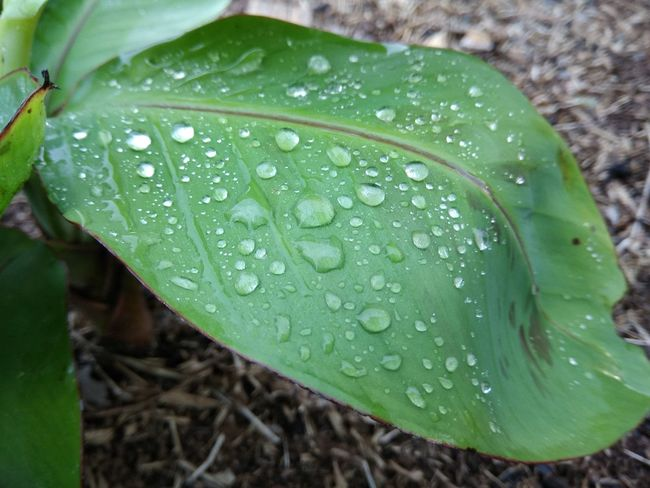 Water Drop Leaf Green Color Nature Wet Close-up Freshness Beauty In Nature No People RainDrop Fragility Day Outdoors Growth Plant Flower Head