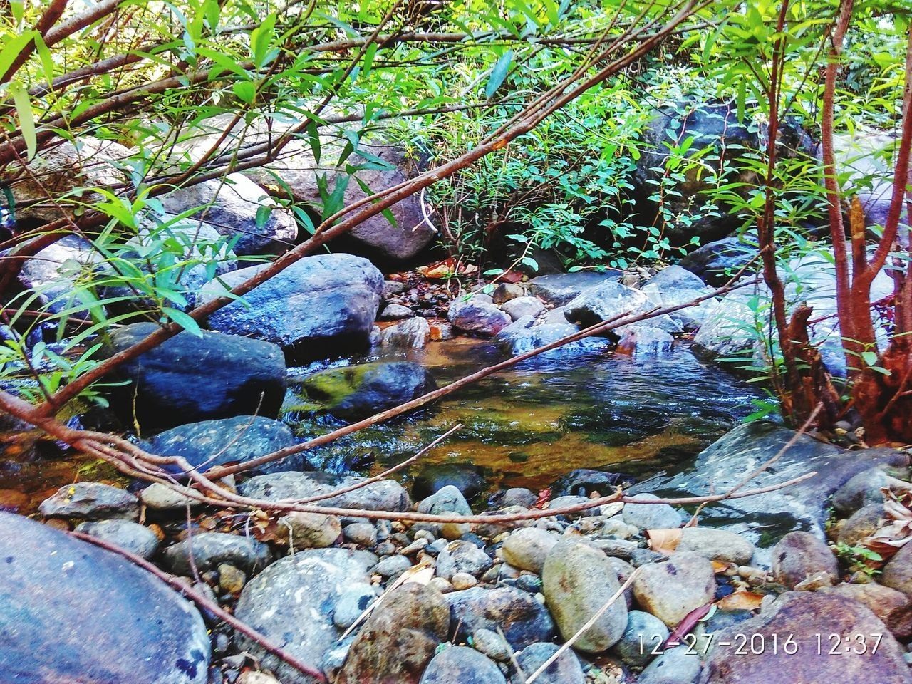 nature, rock - object, day, outdoors, tranquil scene, tranquility, beauty in nature, water, tree, no people, river, forest, leaf, scenics, growth, branch