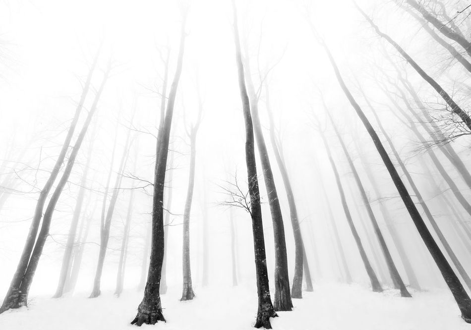 Beautiful stock photos of winter, tree, nature, snow