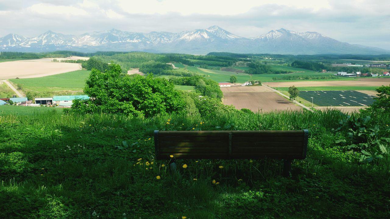 Hokkaido, Japan Sunny☀ 富良野 Mountain Range Beauty In Nature Wildflowers Green Ultimate Japan The Great Outdoors - 2017 EyeEm Awards