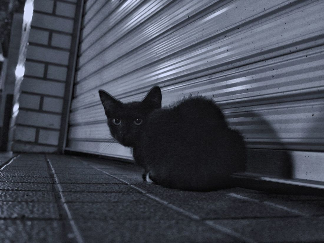 Finding Nagasaki Cat : RainyDay On The Street Animal Photography Kitten Stray Cat Snapshots Of Life Somewhere Nagasaki city Noir Black And White Midnightmemories /Lumix GX1 LUMIX G Vario 50mm