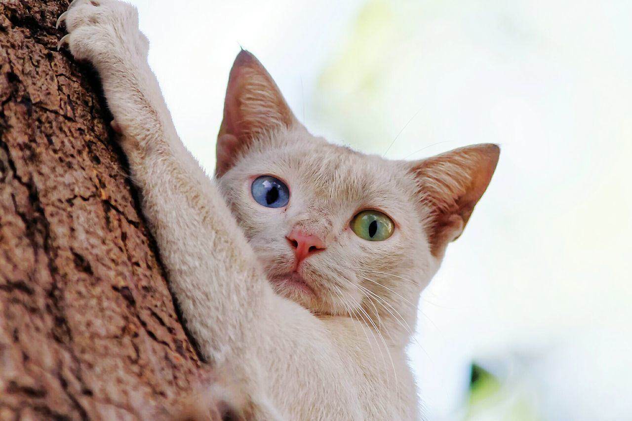 Let me climb Domestic Cat Pets Domestic Animals One Animal Blue Eyes Looking At Camera Beauty Tabby Cat Close-up Outdoors Portrait Animal Themes Mammal Cat Lovers Cat Photography Cateyes