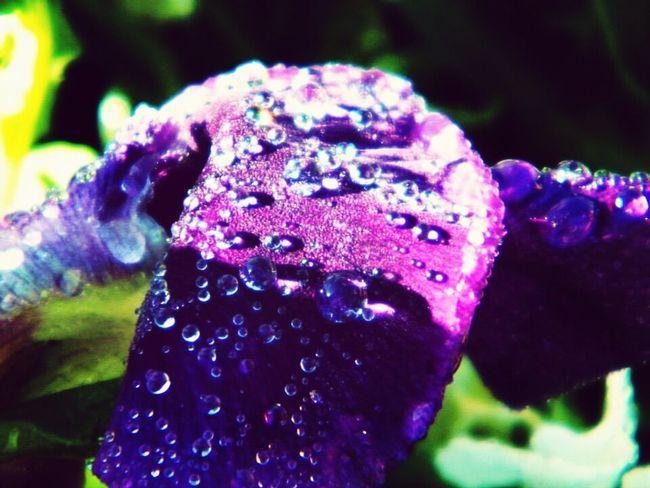 Macro Flower Winter