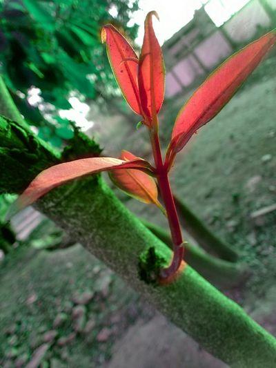 Need to grown... First Eyeem Photo