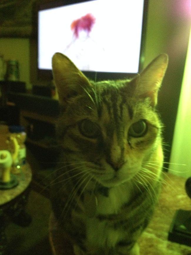 Mew the cat