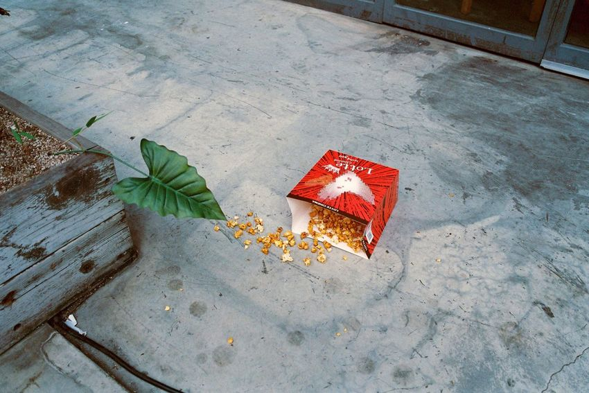 Street Photography No People Film Photography Filmcamera Contax G2 Filmisnotdead Street Popcorns Leaf