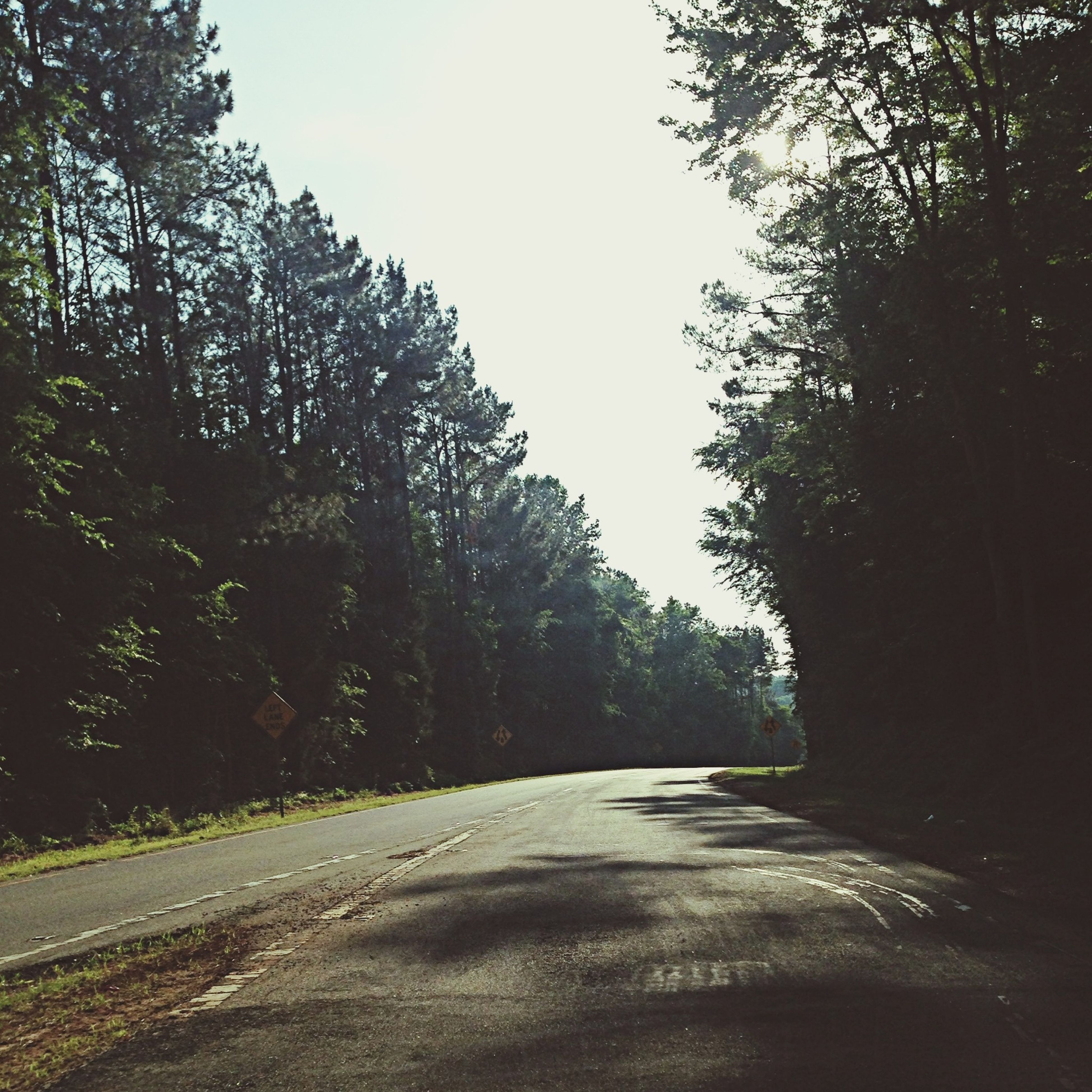 the way forward, tree, road, diminishing perspective, transportation, vanishing point, empty road, country road, tranquility, street, nature, empty, growth, tranquil scene, dirt road, long, clear sky, asphalt, road marking, sky