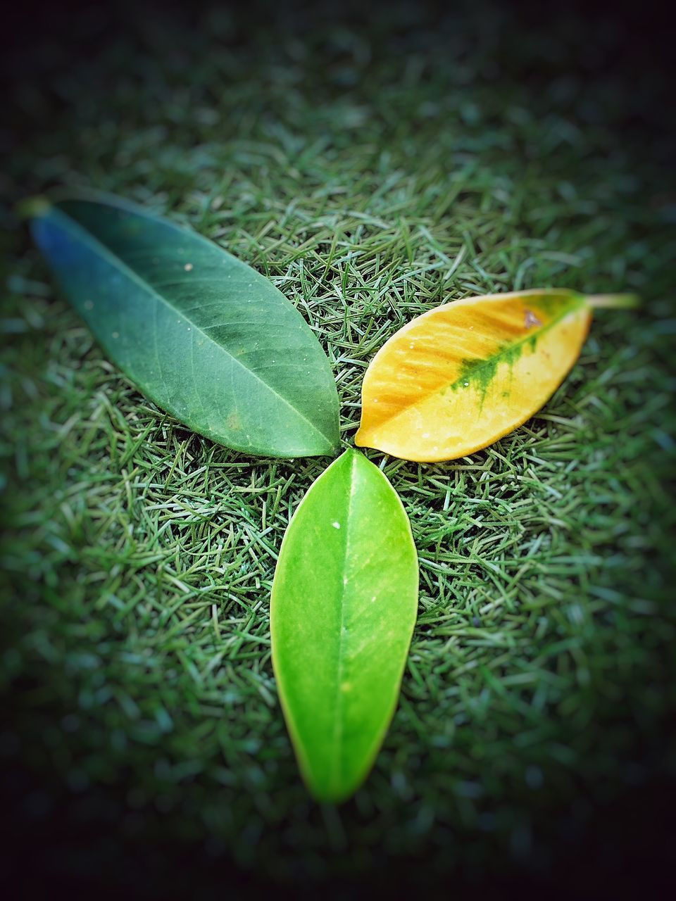 leaf, green color, growth, nature, no people, freshness, close-up, vignette, plant, outdoors, grass, beauty in nature, day, fragility, healthy eating