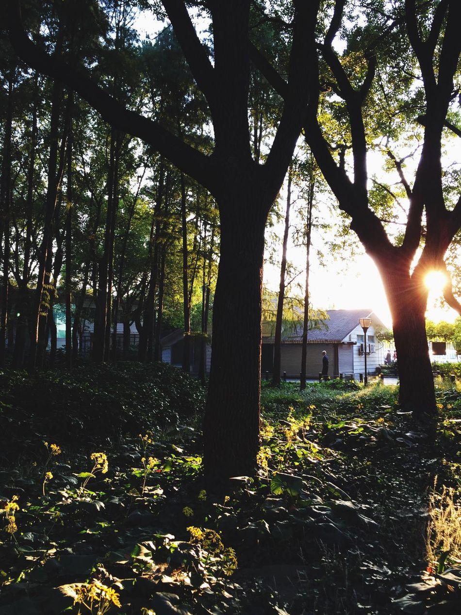 when sunset... Nature Sunset Park Tree