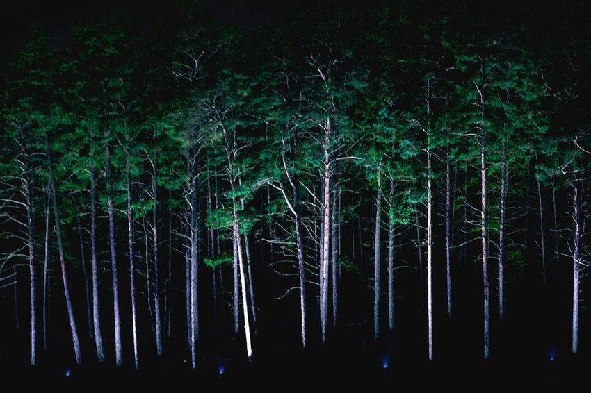 Forest Light Nature Night Trees