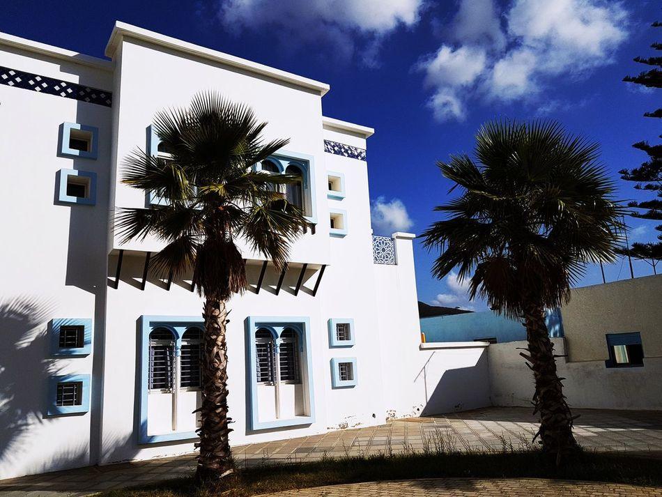TheWhiteHouse Tangier Morocco Palm Tree Blue Sky Sun Lights