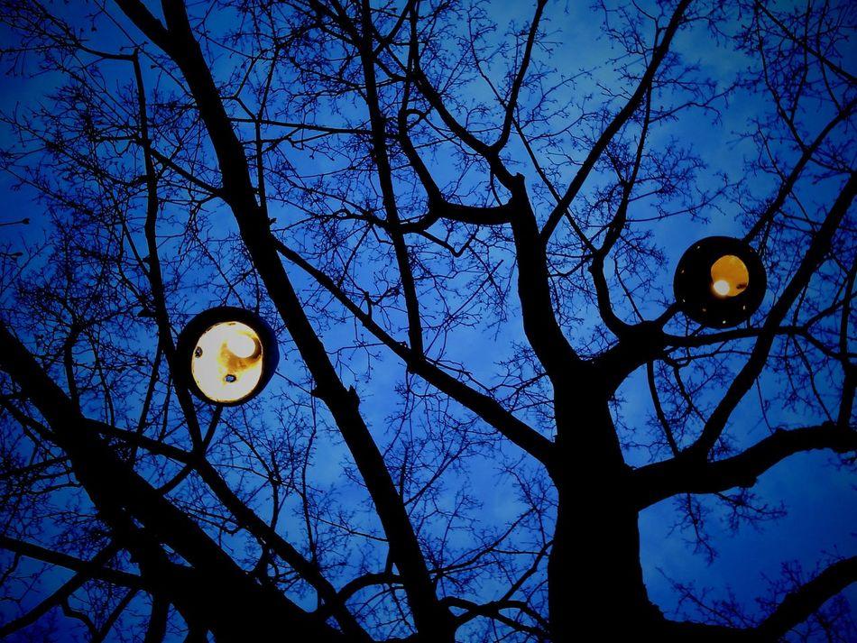 Lamps Tree Lampions Night Krakow, Re