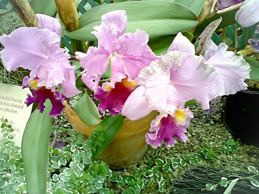 Purple Iris Purple Orchids Flowers An older shot at the Buffalo&Erie County Botanical Gardens. First time I've ever used Photoshop Express too. Taking Photos