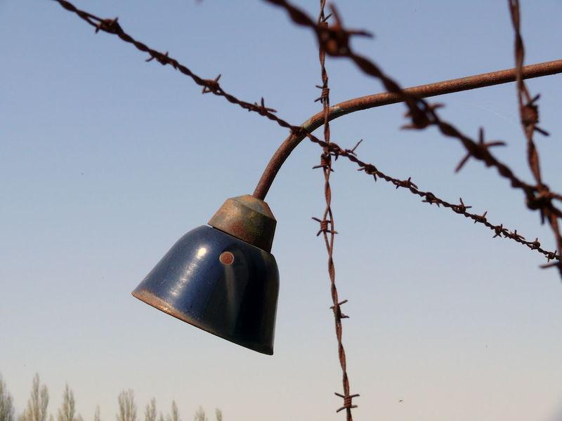 Branch Close-up Dachau Day Focus On Foreground Holocaust Mahnmal Holocaust Memorial Konzentrationslager KonzentrationslagerDachau Kz Low Angle View Massenmord Metal Nationalsozialismus NAZI Nazism No People Outdoors Protection Sky Stacheldraht Stacheldrahtzaun Tree Verbrechen An Der Menschheit Wire
